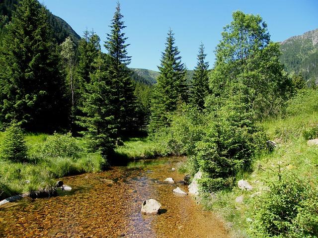 říčka u lesa.jpg
